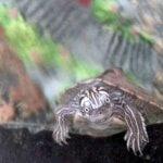 Viața cu o țestoasă în casă