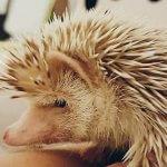 Cum se îngrijește un arici si alte FAQs