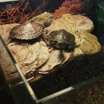 Cum arată acvariul meu pentru 2 țestoase + accesorii