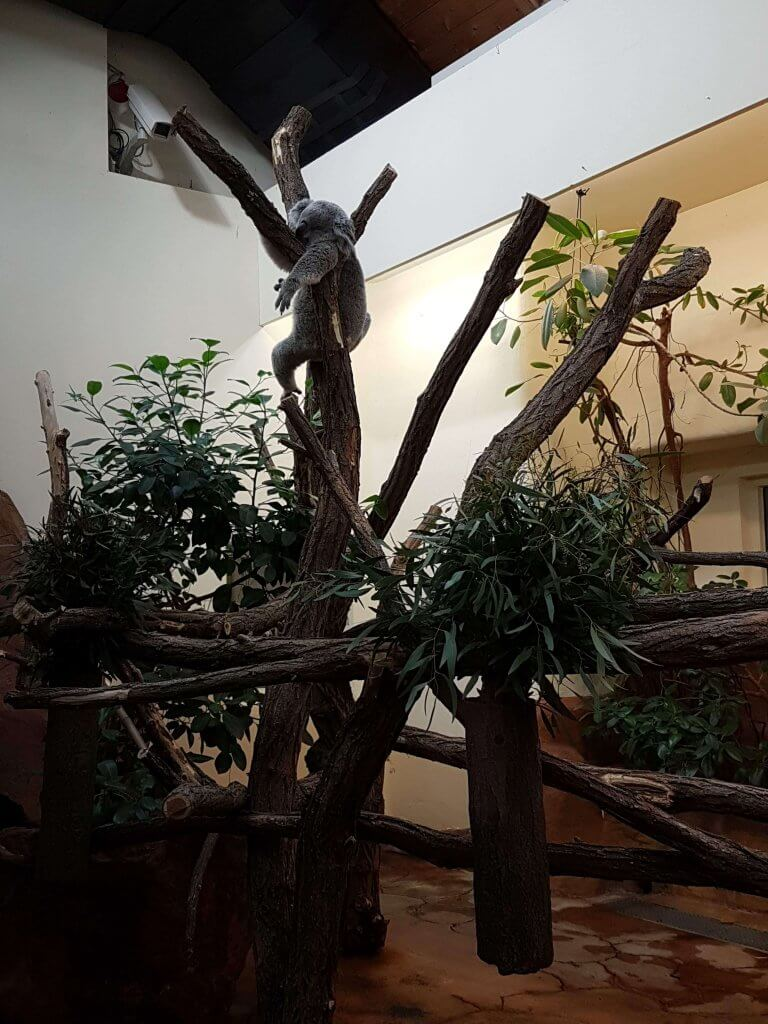 Viena Zoo