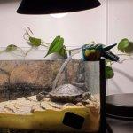 Animale exotice blocate cu oameni în casă